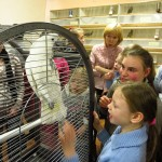 Выставка певчих птиц проходит в краеведческом музее Североуральска (видео)