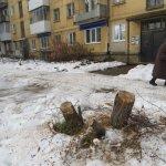В Североуральске еще на одну яблоню стало меньше