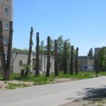 В Североуральске спилят «аварийные тополя». Цена контракта - около полутора миллионов рублей