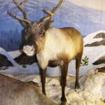 Блогер Аникин: зачем Североуральску музей?
