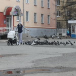 Милота недели: почему в Североуральске голуби ходили кругами за молодым человеком? ВИДЕО