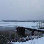 В Североуральске на водоеме в районе Третьего Северного задержались восемь уток и... лебедь