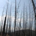 В Североуральском городском округе проходит профилактическая акция «Чистый лес – территория без огня»