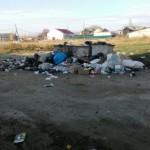 К чему приводит, несвоевременный вывоз бытовых отходов