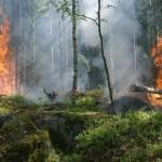 Пусть не придет в наш лес с огнем беда
