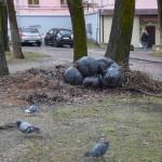 Прижился мусор во дворах. Жители города продолжают жаловаться на мусор