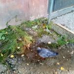 Проблемы дома №19 по улице Чайковского. За несколько лет он заметно «сдал». (фото, видео)