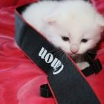 Не пропустите новый конкурс! Объявляем месяц котиков