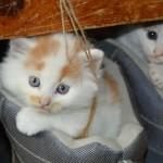 В России могут ввести обязательную платную регистрацию домашних животных