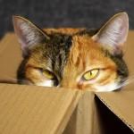 Подарите 80-летней юбилярше трехцветного котика!
