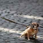 Свердловские депутаты одобрили штраф в 5 тысяч рублей за неправильный выгул собак