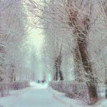 Нынешняя зима будет мягкой и малоснежной. Проверяем народные приметы