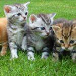 Кто, если не кот? Рассказываем о популярных домашних животных