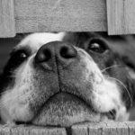 Открываем год Собаки: благотворительный сбор для приюта