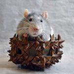 А вы любите крыс? Значит, есть повод отпраздновать это