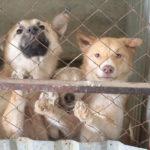 В Ивделе отловят 126 безнадзорных животных
