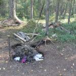 Первый этап акции «Чистый лес – территория без огня» стартует